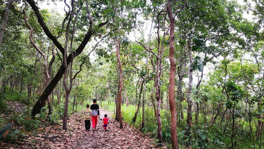 Rear view of people walking on road amidst trees in forest