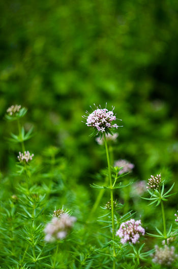 Beauty In Nature Bee Blooming Close-up Day Field Flower Flower Collection Flower Head Flowers Fragility Freshness Green Color Growth Nature No People Outdoors Petal Plant Pollination