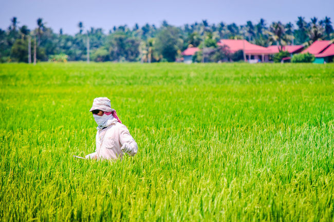 ASIA Kampung Paddy Rice Paddy Villige Worker Agriculture Beauty In Nature Day Farm Field First Eyeem Photo Grass Green Color Growth Havesting Malaysia Nature One Person Paddy Field People Real People Rice Paddy Rural Scene Sky