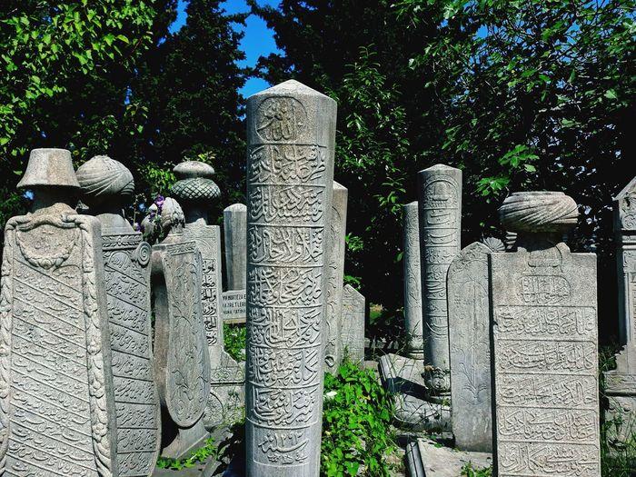 Tree Cemetery