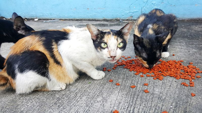 Animal Save Life Helping Stray Cat Eating Hungry Poor  RISK Accident Help Home Share Hope Hug Campaign Shelter Quality Of Life Family Love Alive  Streetphotography Pets Domestic Animals Animal Themes Mammal No People Day Outdoors Close-up