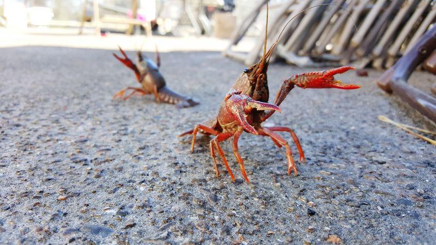 Louisiana Louisianaphotography Louisiana Living Onlylouisiana Louisiana Food Crawfish Crawfish Time Crawfish On Deck