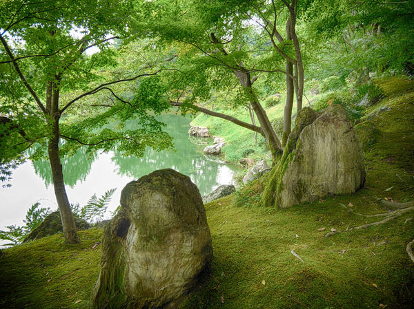 Peaceful Green Harmony of Ritsurin Gardens Backgrounds Beauty In Nature Composition Day Green Green Color Green Color Green Green Green!  Growth Harmonious Harmony Moss Nature Nature No People Outdoors Peace Reflections Ritsurin Garden Rocks Shade Tree Trees Water Zen