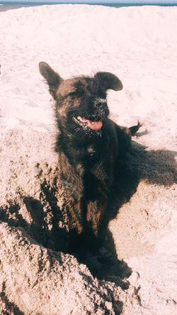 Sea Beach One Animal Mammal Animal Themes Animal Sunlight Pets Domestic Animals Dog No People Nature Day Sand Outdoors