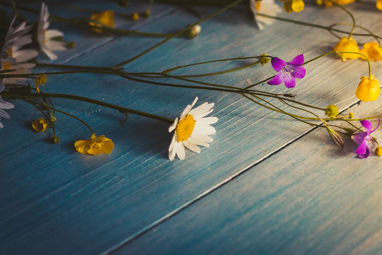 Wild flowers on wooden background grunge copyspace blooming Background Beauty In Nature Blue Close-up Day Flower Flower Head Flowering Plant Indoors  Nature No People Petal Purple Selective Focus Table Top View Wood - Material