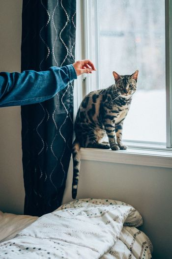 Lemme Pet U Window Seat Cat Sitting Cat Cats Of EyeEm Indoors  Window Sitting One Animal Domestic Cat Pets One Person Close-up Home Interior