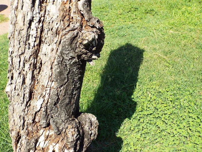 Shadow of tree on field