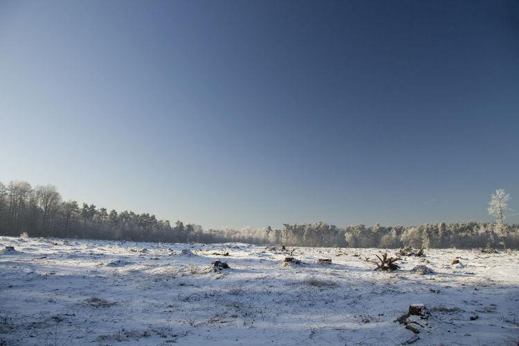 Snow land Snow