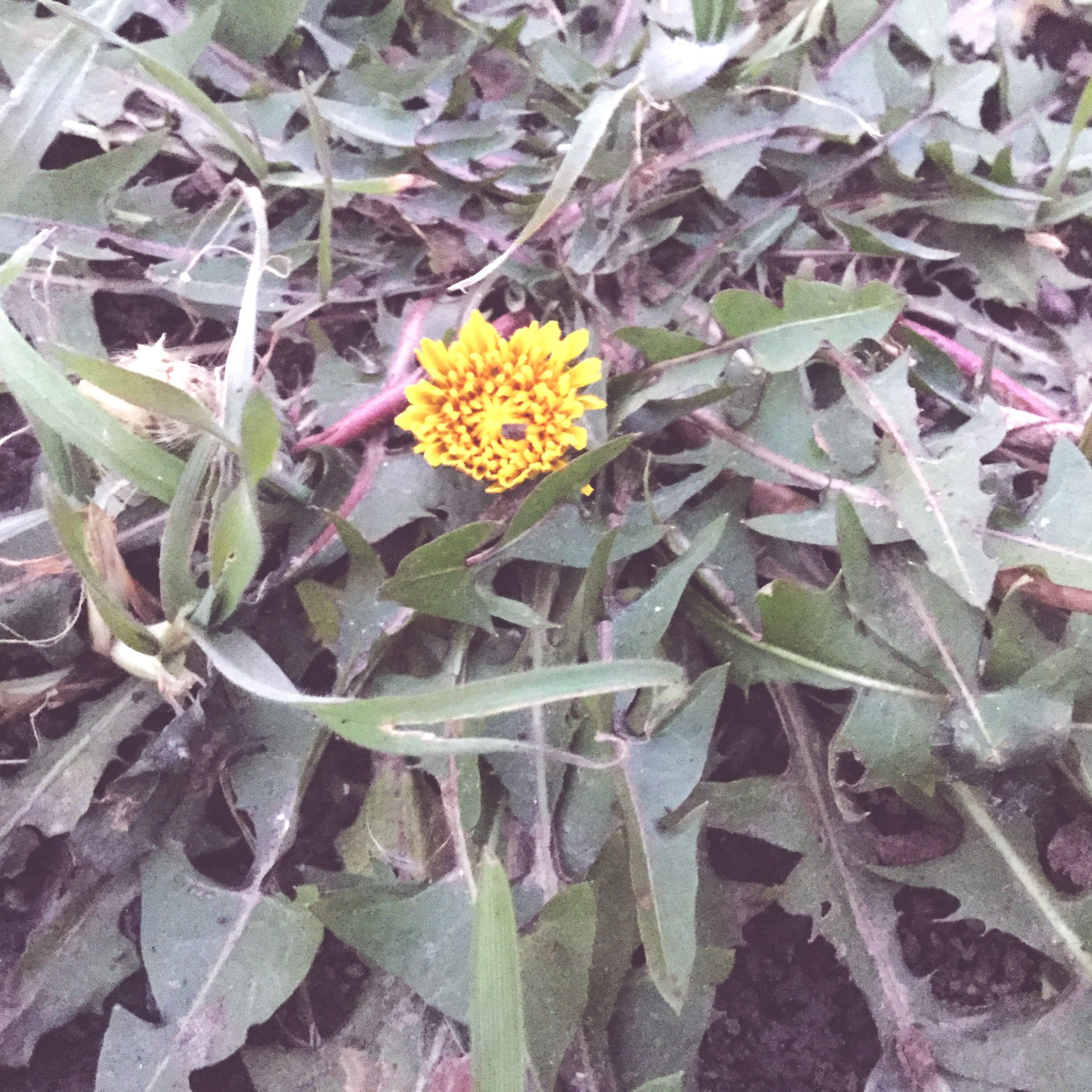 flower, fragility, freshness, petal, flower head, plant, beauty in nature, nature, high angle view, growth, yellow, leaf, blooming, outdoors, no people, pollen, close-up, day