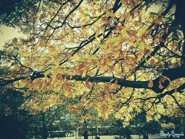 Very Nice Day Санкт-Петербург листья желтые прекрасныйдень The Week On EyeEm The Week On Eyem