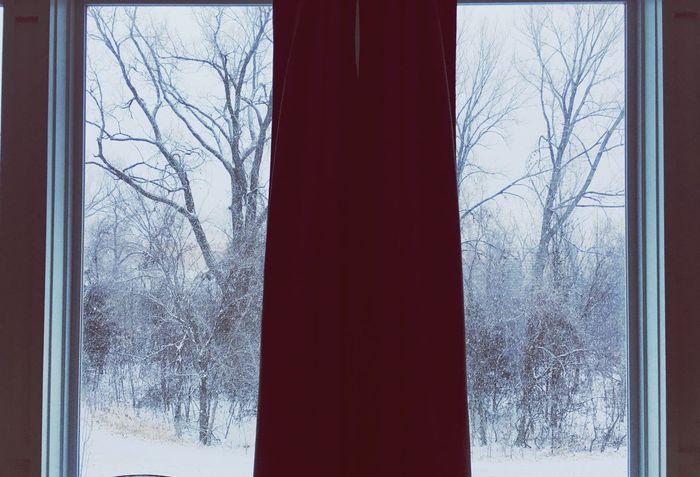 Winter Snow Bare Tree Cold Temperature Tree Window Weather