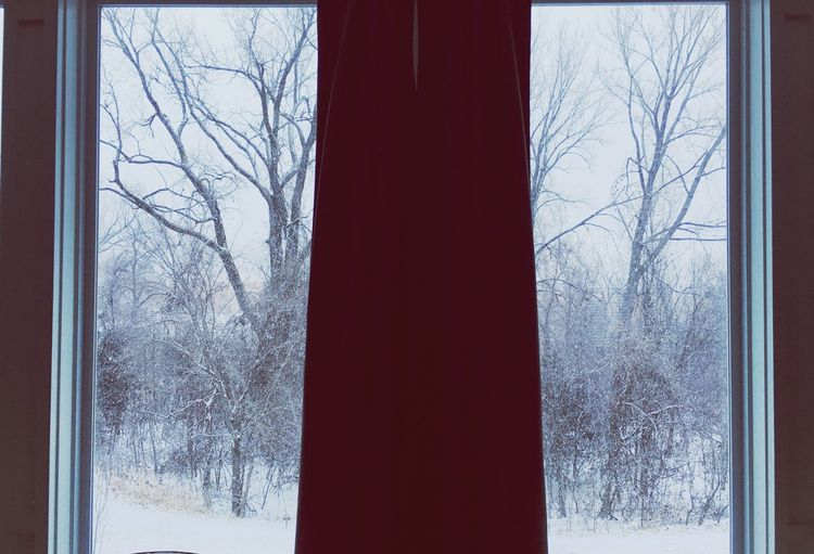 Winter Snow Bare Tree Cold Temperature Tree Window Weather