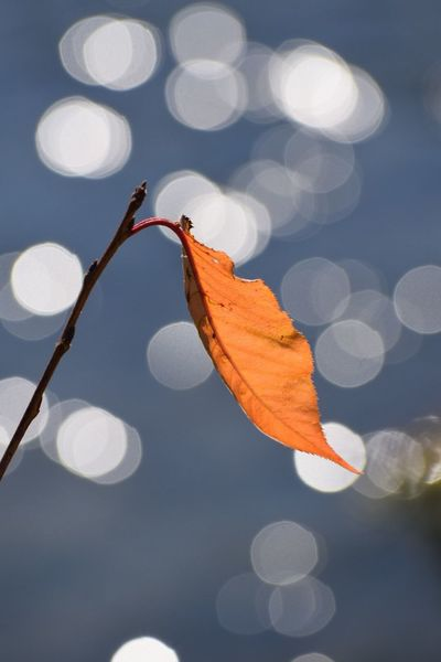 Nature Focus On Foreground Beauty In Nature Close-up Fragility Leaf Bukeh Photography Bukeh