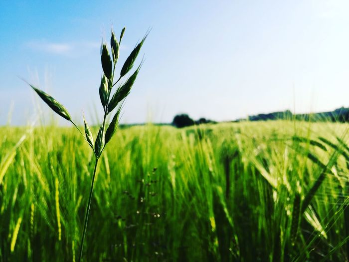 The Essence Of Summer Wheat Field Taking Photos Relaxing Enjoying Life Jehovahscreation