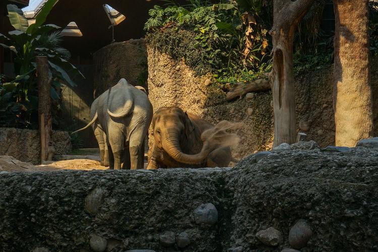 Elefant am Trocknen Tree Elephant African Elephant Animal Trunk Tree Trunk