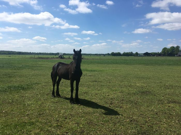 Animal Themes Beauty In Nature Cloud - Sky Day Domestic Animals Field Grass Horse Landscape Mammal Nature No People One Animal Outdoors Scenics Sky Tree