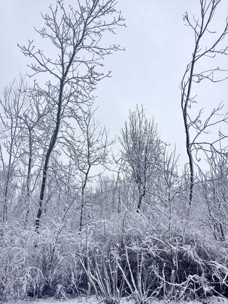 Winter dream EyeEm Nature Lover Cold Temperature Bush Snow Nature Low Angle View Sky No People Tree