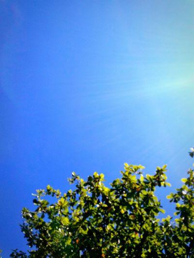 sun lighting in the sky on the trees Sun Sunlight Sunny Sunlight And Shadow Lighting light and reflection Light Tree Clear Sky Blue Flower Branch Sky Close-up