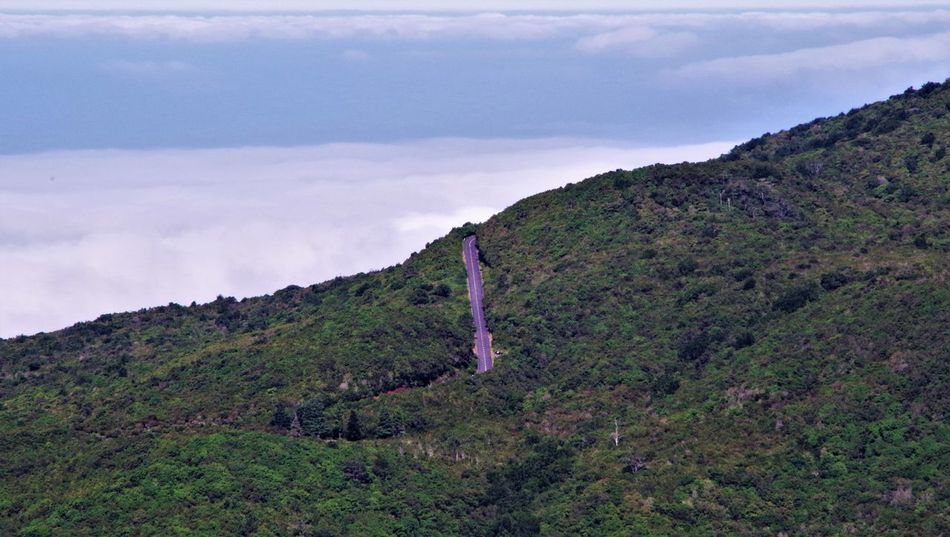 View of a road above the clouds in the central high plateau of western Madeira, Portugal. Above The Clouds Beauty In Nature Cloud - Sky Clouds Cloudscape Day Forest Grass Growth High Plateau Landscape Madeira Mountain Nature No People Outdoors Plateau Portugal Road Road Marking Scenics Sky Tranquil Scene Tranquility Tree