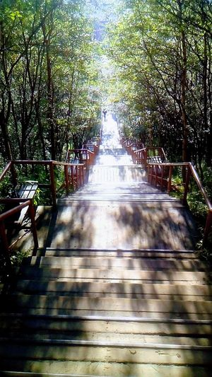 Stairs Day Sunlight Tree The Way Forward Shadow Nature Water No People Outdoors Growth Beauty In Nature Sky