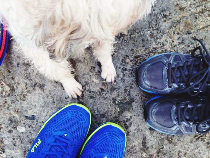 all in..:) Stewiethedog Jogging