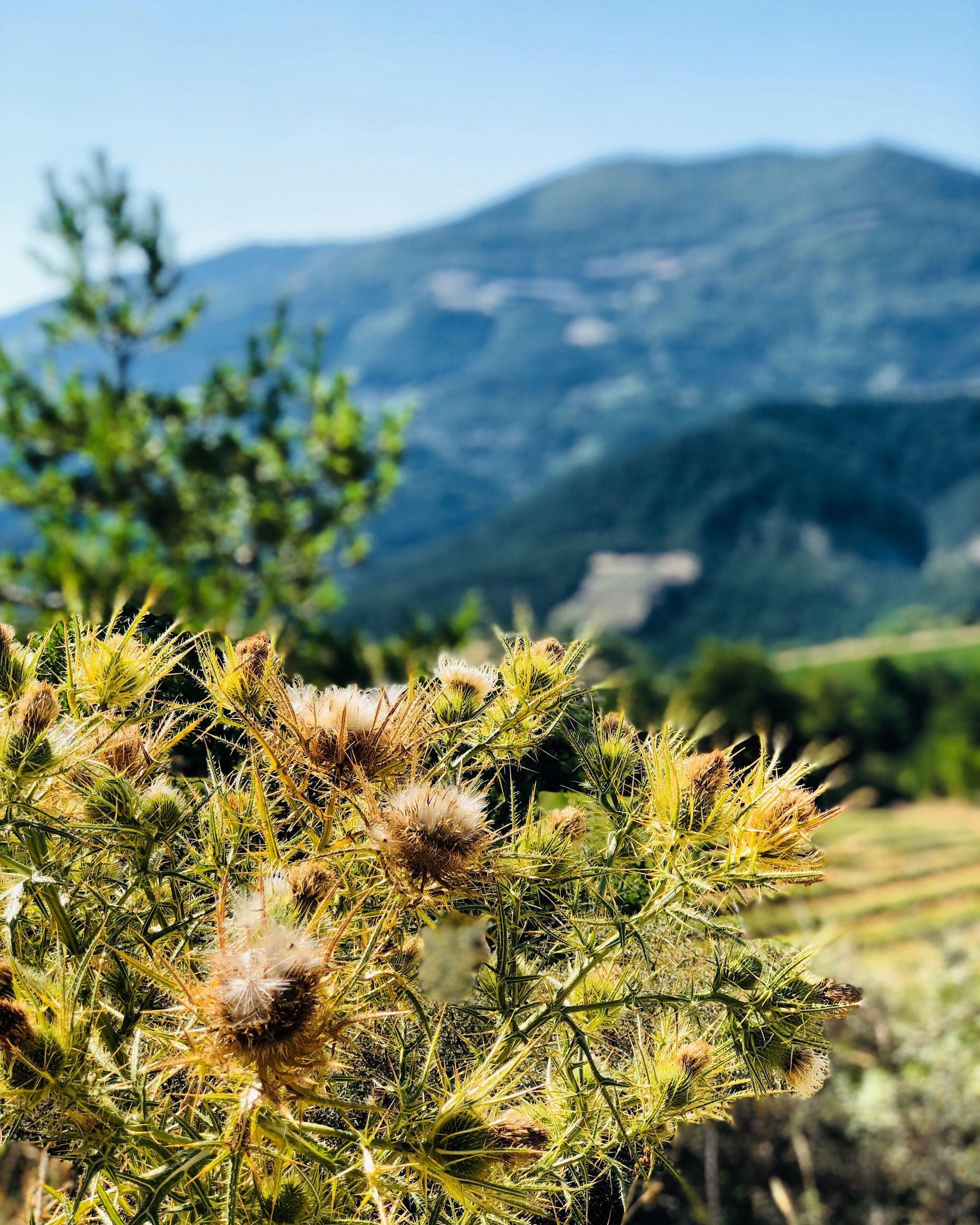 plant, growth, mountain, beauty in nature, nature, day, focus on foreground, no people, close-up, scenics - nature, tranquility, outdoors, flower, flowering plant, sunlight, freshness, cactus, green color, succulent plant, tranquil scene, flower head