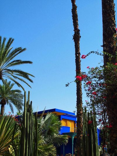 Jardin Majorelle. Palm Tree Yves Saint Laurent Jardin Majorelle Marrakech Bleu Majorelle Sky Tree Plant Nature Built Structure Architecture Building Exterior Blue Clear Sky Outdoors