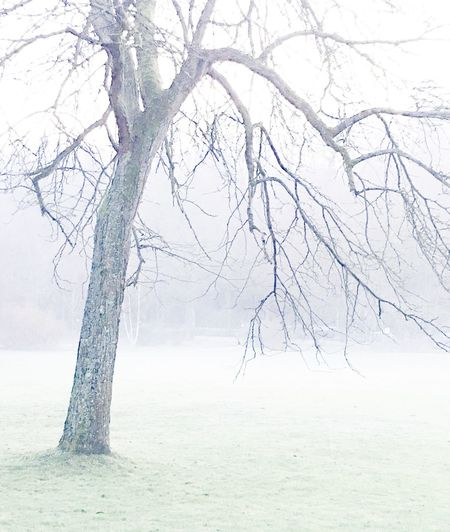 It's Cold Outside Enjoying Life Nature Photography Neujahr Wintertime Winterscapes Enjoying Nature Foggy Day Tree Silhouette Frosty