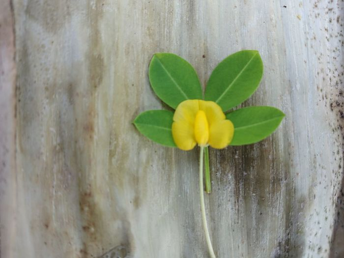 Close-up of yellow flowering plant on wall