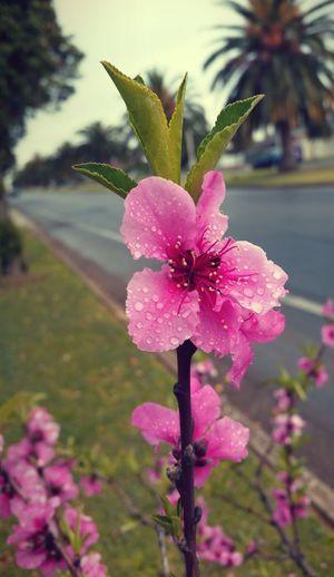 Beautiful flower Taking Photos Enjoying Life