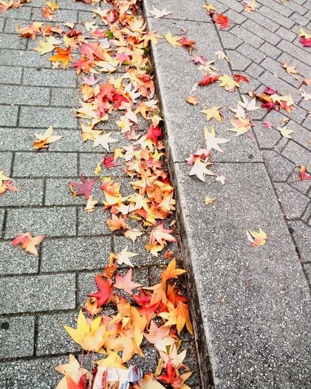 Automn leaves Automn #leaves #landscape #urbanphotography #sidewalk #Stone #cladding #paving #City #town #automne #automnleaves #landscapephotography Backgrounds Multi Colored Full Frame Red Close-up Detail