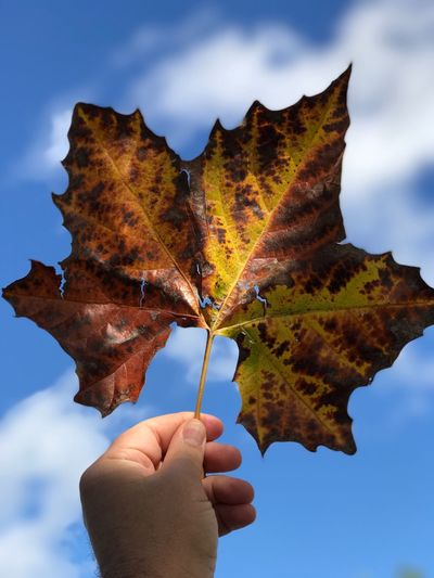 Cropped Hand Of Person Holding Maple Leaf Against Sky