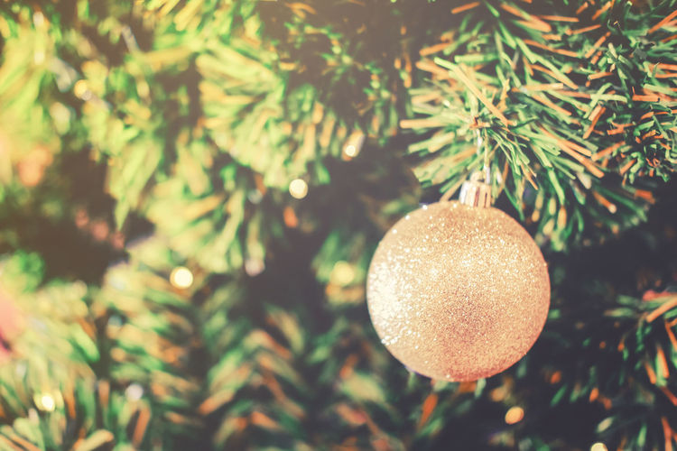 Beauty In Nature Celebration Christmas Christmas Decoration Christmas Ornament christmas tree Close-up Day Green Color Growth Nature No People Outdoors Tree
