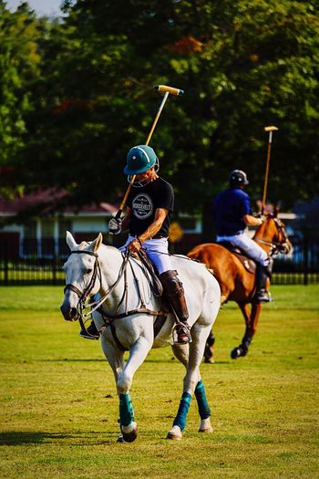 You win some, you lose some... Horse Horseback Riding Domestic Animals Mammal Jockey Animal Themes Two People Competition Competitive Sport Real People Sport Only Men Outdoors Grass Adult Adults Only Day People Family Time Polo Granville 614 Columbus, Ohio
