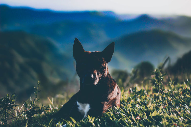 Dog sitting on a field