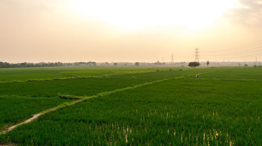 indian Agriculture #sky Sky Landscape Plant Field Environment Scenics - Nature Green Color Beauty In Nature Land Nature Tranquility Rural Scene Agriculture Tranquil Scene Grass Sunset No People Farm Growth Outdoors Electricity