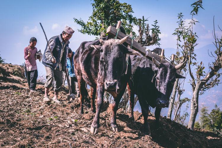 Plough Ploughed
