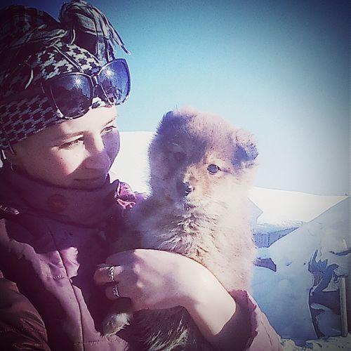 Mydog Mydog♡ Dog Love Dog Winter Winter Day Sunny Day Me Girl Girl Arbast Village Holidays собака друг человека арбас арбасик каникулы каникулыбыли ядома деревенская люблюсвоюсобаку