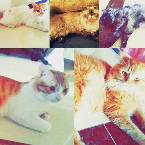 Mycat❤ Cute Pets قططي ماشاء الله نيوتن كلاودي توفي  هابي فوكس