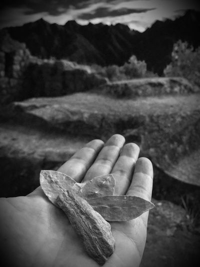 Sacrifice Pachamama  Ancient Civilization Ancient Temple Machu Picchu Peru Coca Leaf Stone Hand Blackandwhite Photography Black & White making an offering gift for the Nature Spirits/Pachamama - K'intu (bunch of three perfect coca leaves) together with a stone including a wish Religion Inca Inca Trail Spirituality Faith Belief Religions Tradition Traditional Culture Culture Perspective People And Places EyeEm Best Shots - Black + White POV