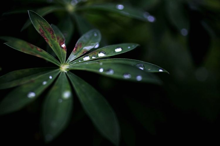 Close-Up Of Water Drops On Leaf In Garden