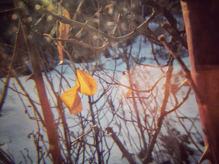 Листочки лист осень ветки