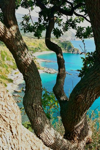 Hugging A Tree Original Experiences Impressive Capo Vaticano Turquoise Sea Turquoise-green Water From Above  Spectacular View Ladyphotographerofthemonth Enjoying Life Beautiful Scenery Colour Splash Mediterranean  Impressive View Colourful World Powerful Nature Farbenfroh Powerful Image Best Beaches Cliff View Strandbuchten Beach Bay Breathtaking View Soul Filling View Heartwarming Lost In The Landscape