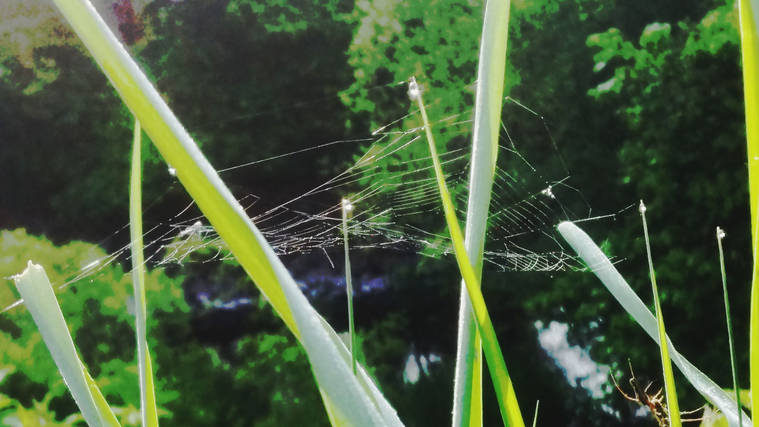 animal themes, one animal, green color, animals in the wild, grass, plant, wildlife, focus on foreground, close-up, growth, nature, blade of grass, insect, beauty in nature, green, outdoors, day, field, leaf, no people