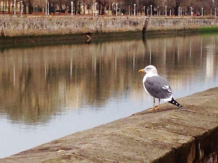 San Sebastián River Bird Animal Wildlife Animals In The Wild Water Lake Animal Themes Outdoors One Animal No People Nature Day