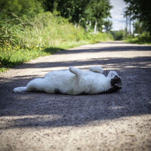 An adorable cat sleep on the road One Animal Animal Animal Themes Mammal Vertebrate Pets Domestic Nature Domestic Animals Feline Day No People Cat Domestic Cat Canada Prince Edward Island Road Sunlight Country Road Countryside Rural Scene Rural Plant Relaxation Lying Down Outdoors