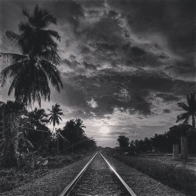 Bnwlove Blackandwhitelove Bnwphoto Amazing digitalart amphotography california love palms palmtree freighttrain railroads
