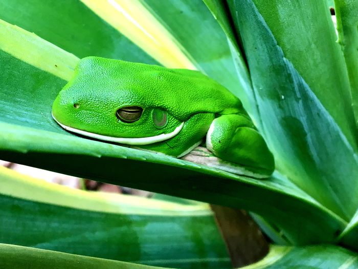 High angle view of green frog on plant