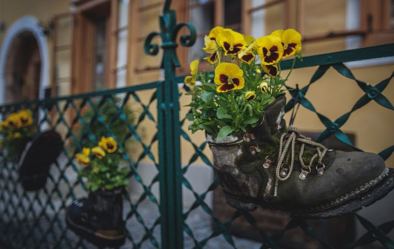 Flower Focus On Foreground Yellow Balcony Growth Plant Outdoors Close-up Nature Freshness Nautical Vessel EyeEm Best Shots Beauty In Nature Shoes ♥