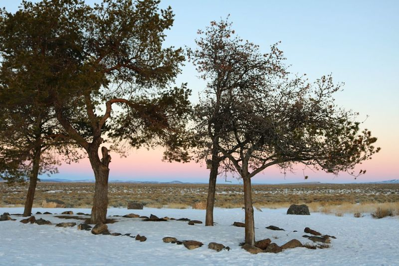 Tree Landscape Tranquility Sky Outdoors Nature No People Scenics Beauty In Nature Clear Sky Winter Pink White Nature Snow Day Snowy Snow Covered Snow ❄ Blue Red Sun Sunset